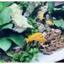 Réaménagement d'aquarium